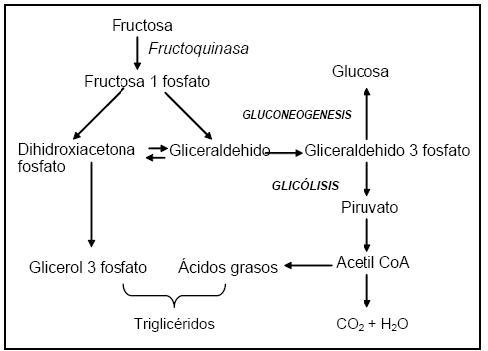 sacarosa vs metabolismo de la glucosa en diabetes
