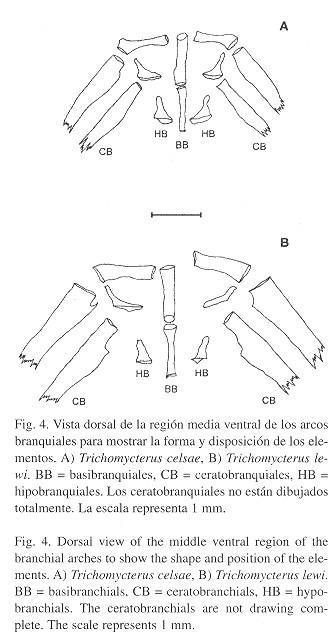 Dos nuevas especies de bagres del género Trichomycterus ...