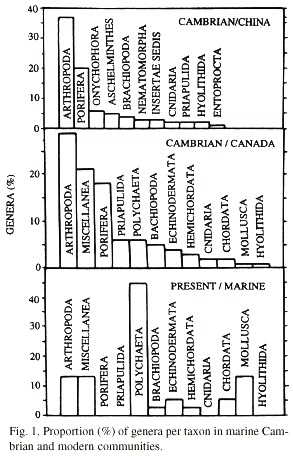 How do i convince someone of punctuated equilibrum together with Sofabrade further Cambrian period furthermore 4726930 together with Cambrian period. on cambrian explosion