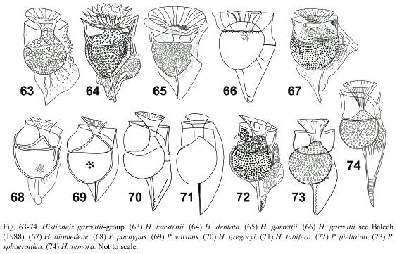 Synonymy and biogeography of the dinoflagellate genus