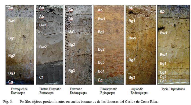 Agronomía Costarricense - Caracterización química y clasificación ...