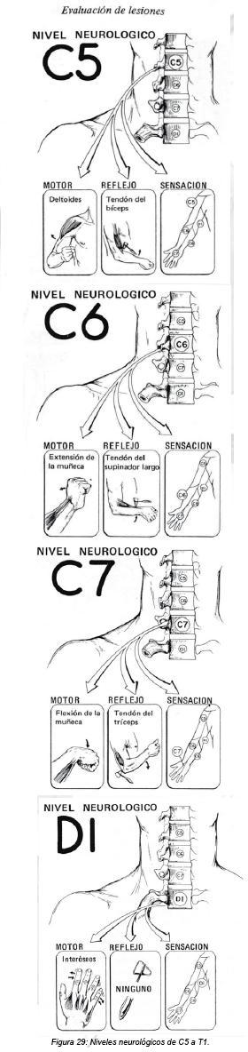 Anatomía y exploración física de la columna cervical y torácica