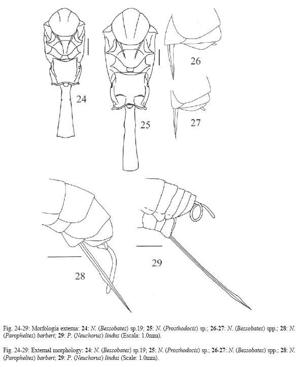 Filogenia De Avispas Del Gnero Netelia Hymenoptera Ichneumonidae