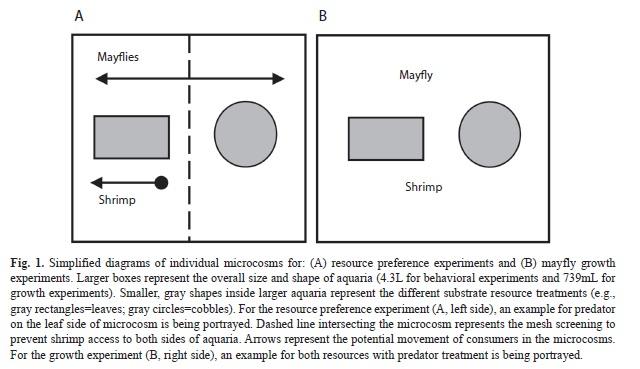 Do omnivorous shrimp influence mayfly nymph life history